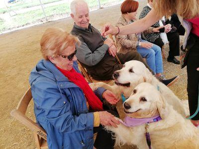 Introducció al món dels gossos de teràpia