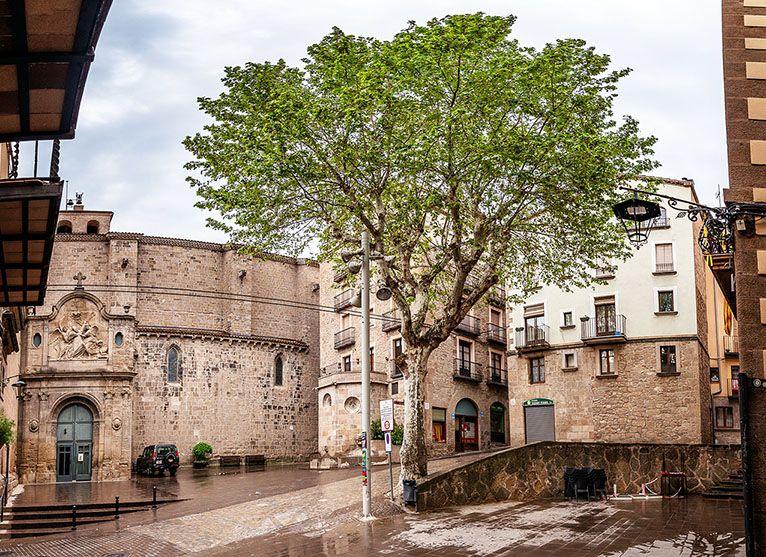 El plataner de la plaça de la Catedral, un dels protagonistes de L'Ecològica
