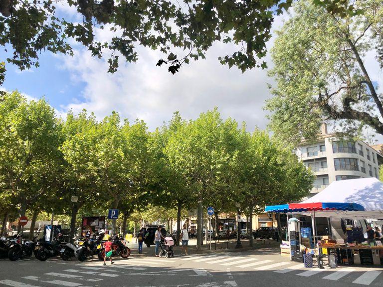 L'Ajuntament de Solsona aplica un tractament fitosanitari a l'arbrat de la plaça del Camp