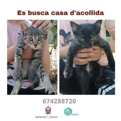 L'Ajuntament de Solsona fa una crida per trobar cases d'acollida d'urgència per a dos gatons