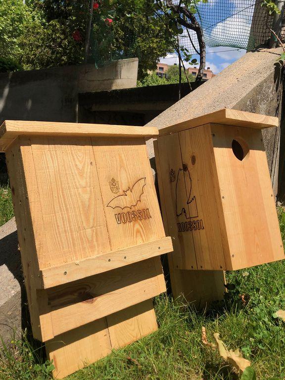 Solsona instal·la caixes niu per a ocells i ratpenats en quatre zones del nucli urbà