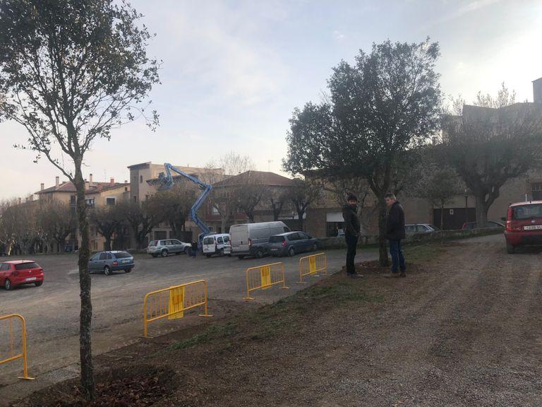 Solsona trasplanta alzines i roures afectades pel canvi de traçat de la carretera de Sant Llorenç